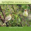 Springtime bird choir. CD