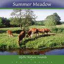 Summer meadow. CD